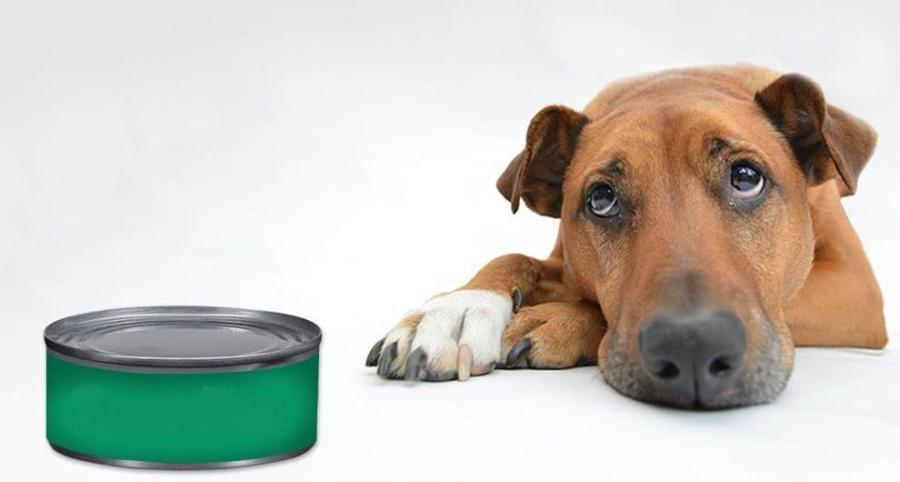 sad Dog looking at canned fish
