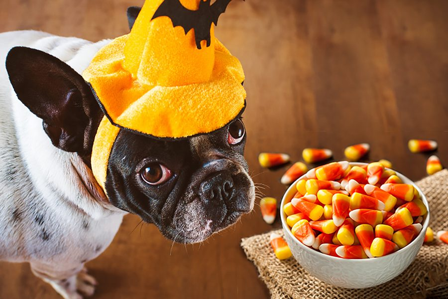 Foods Your Puppy Should Not Be Eating
