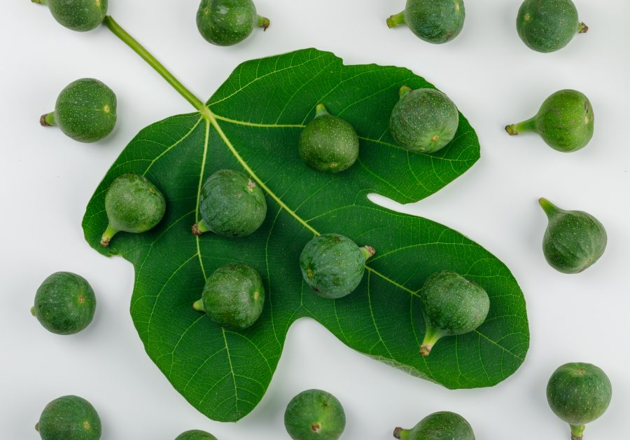 Can Dogs Eat Figs' Leaves?