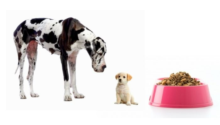 Difference Between Puppy Food and Adult Dog Food