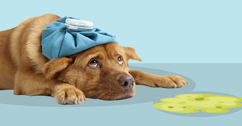 Causes of Severe Vomiting in Dogs