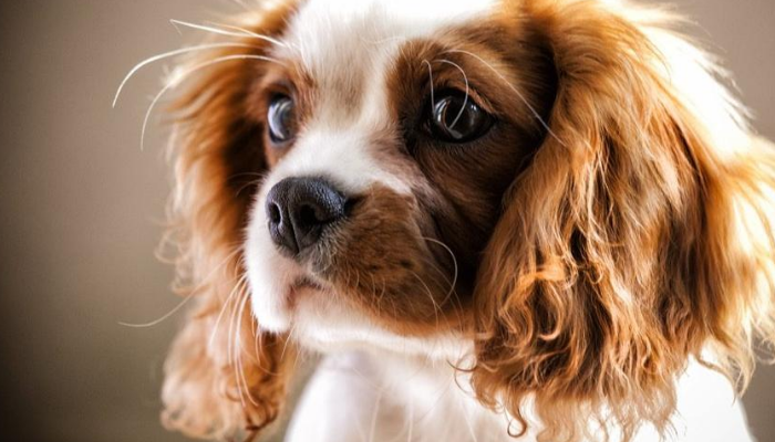 Dog Whiskers Have Different Names