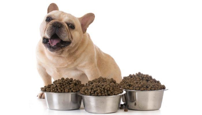 Puppy Feeding Guide