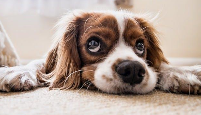 What Are Dog Whiskers?