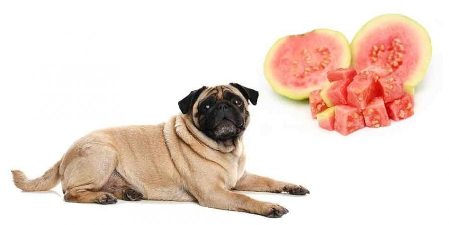 Benefits of Guavas for Dogs