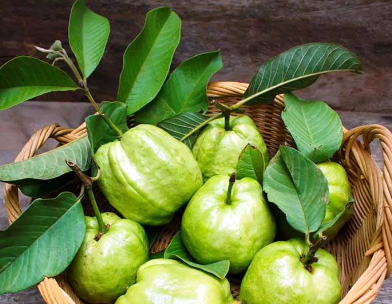 Why Guavas are good for Dogs