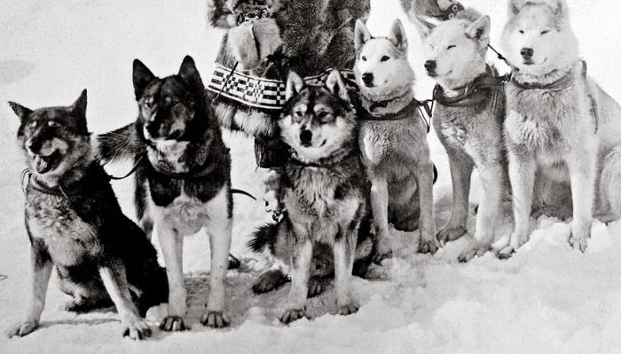 Historyof huskies