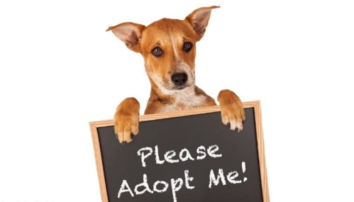 Dog Adoption and Costs