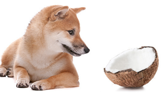 coconut toxic for dogs