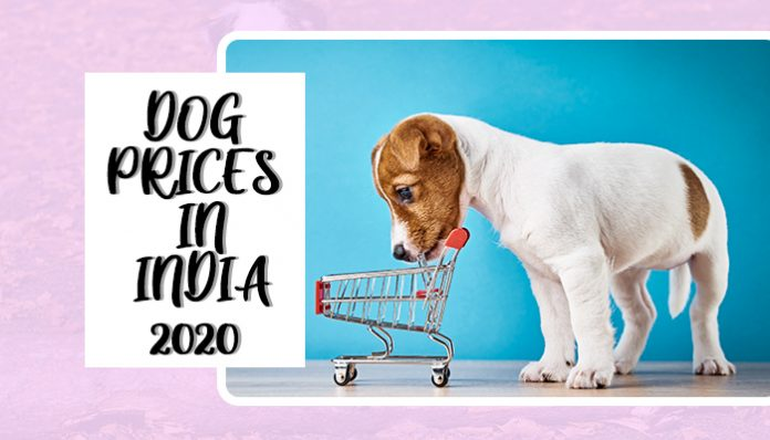 Dog prices in India