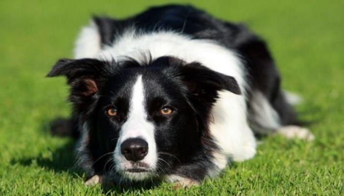 The World's Smartest Dog