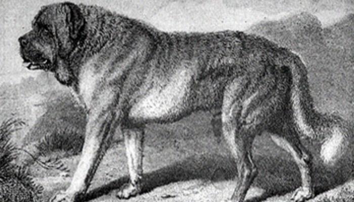 English mastiff History