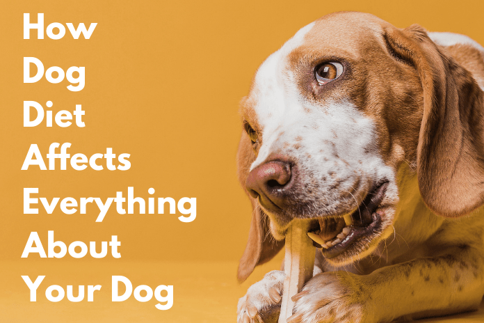 How Dog Diet Affects Everything About Your Dog