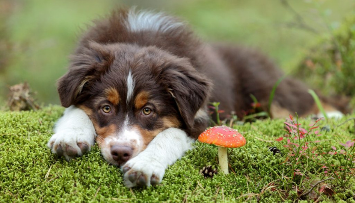 mushroom and dogs