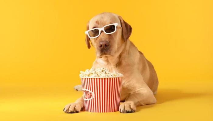 dog and popcorn