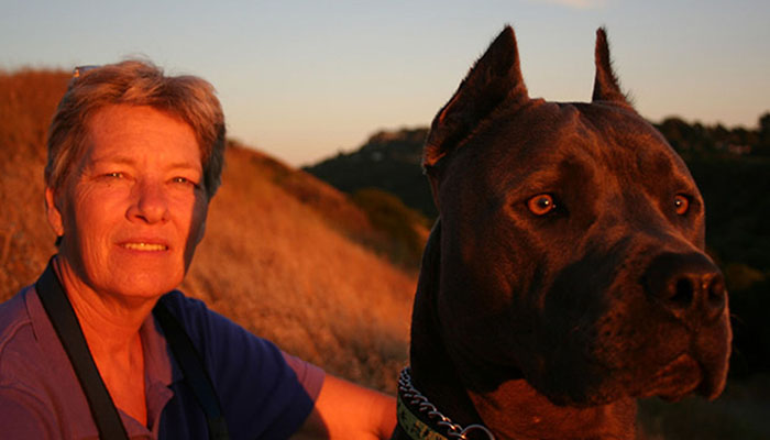 Cane Corso with a woman
