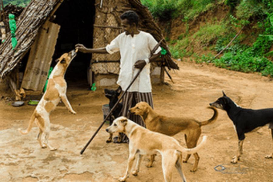 Combai dog training