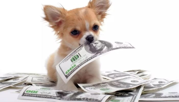 dog maintenance cost