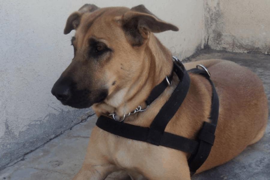 Combai dog sitting