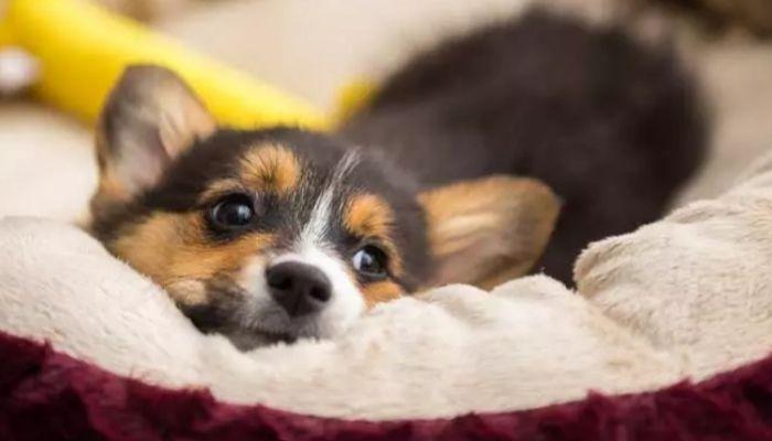 dog settling in new house