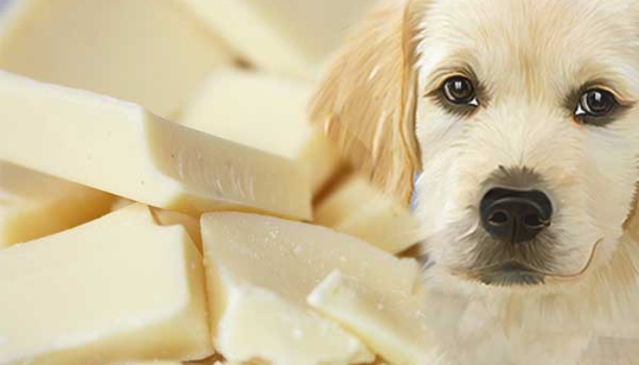 white chocolate for dogs