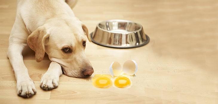 Sad dog with raw egg