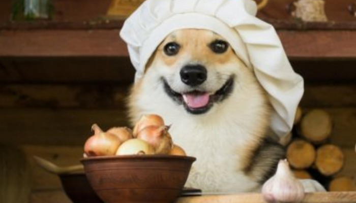 onions for dogs