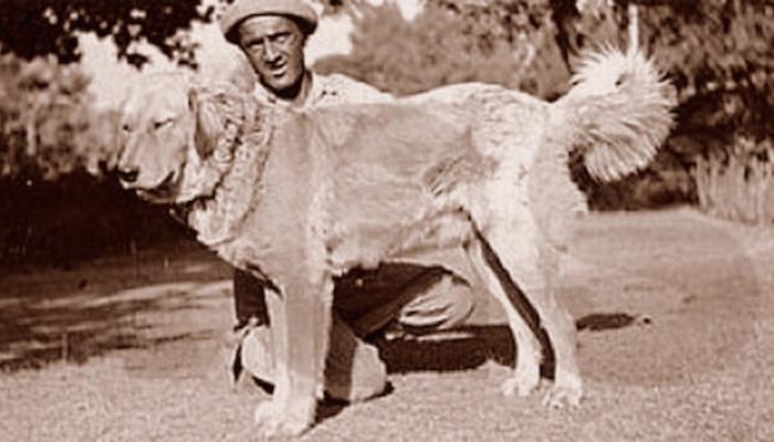 History of a Bakharwal dog