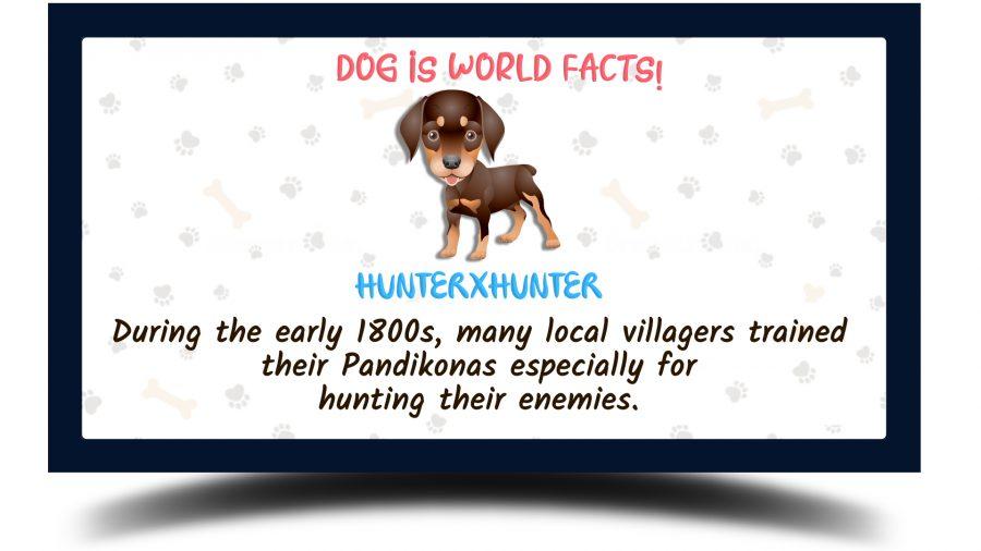 Hunter Pandikona Dog