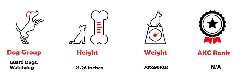 Kumaon Mastiff quick facts
