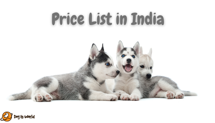 Siberian Husky Price in India