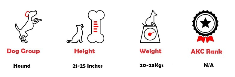 Rajapalayam dog quick facts
