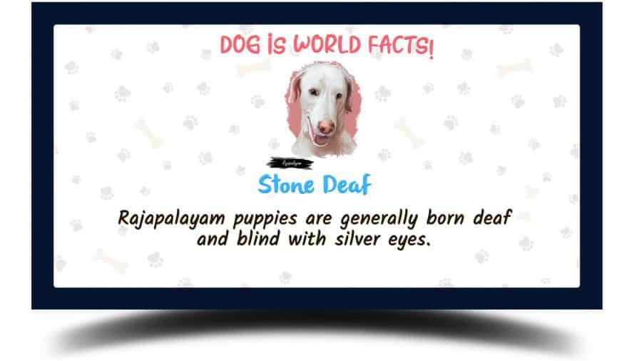 Rajapalayam dog facts