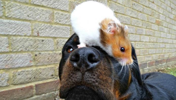 Dog and Hamster