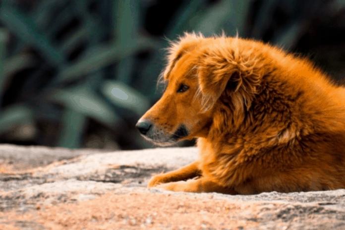 10 Reason to adopt a stray dog