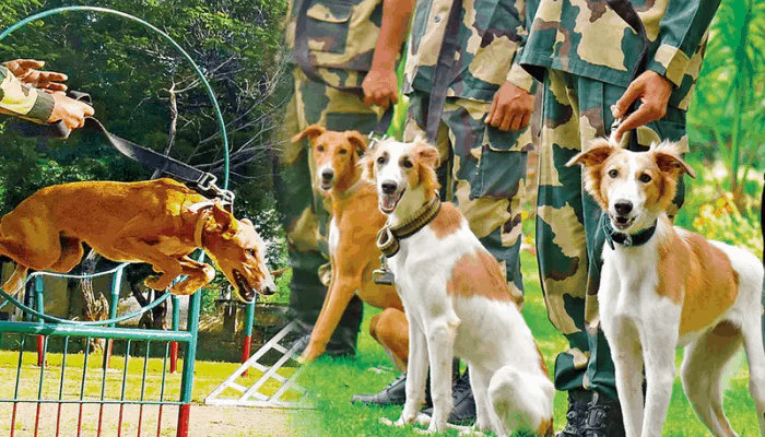 Training an Indian street dog