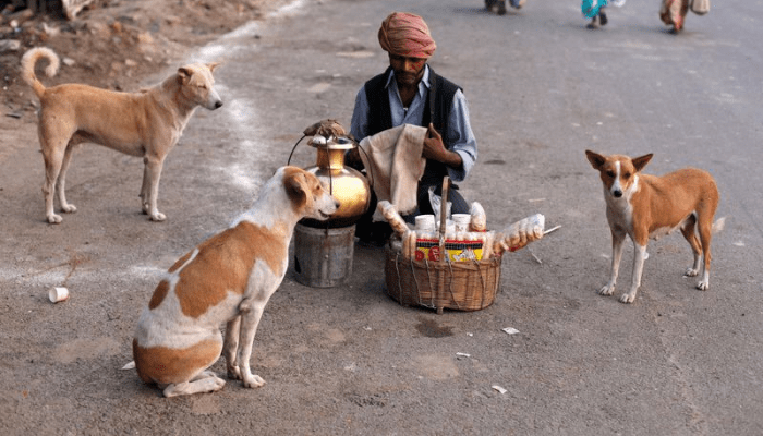 Indian street dogs having a longer life span