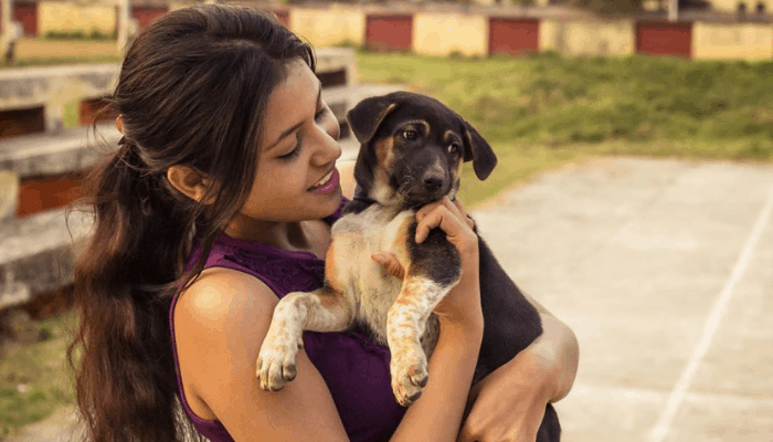 Picture of a street dog with owner