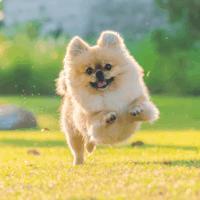 Pom running