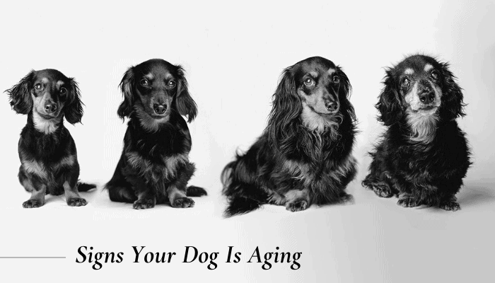Aging of Dogs