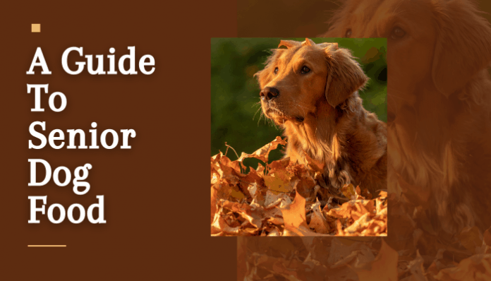 A Guide To Senior Dog Food