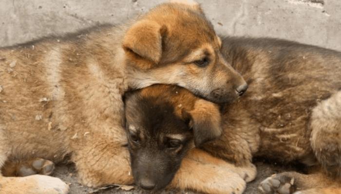 Indian street dog abandoned
