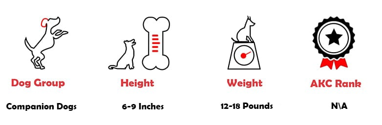 Quick facts about a Pomchi Breed