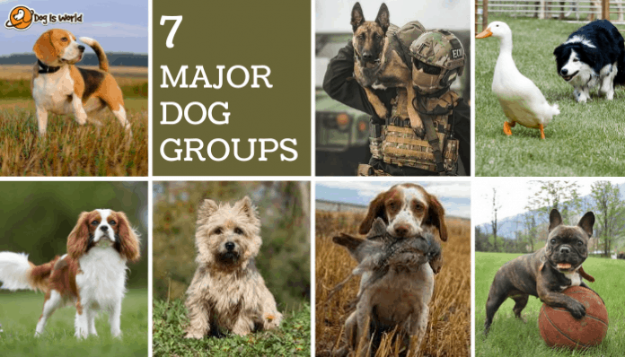 different dog groups in a collage
