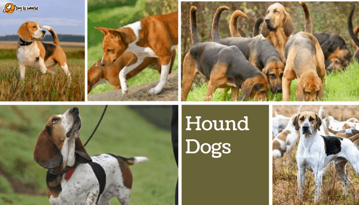 different dogs in hounddog group