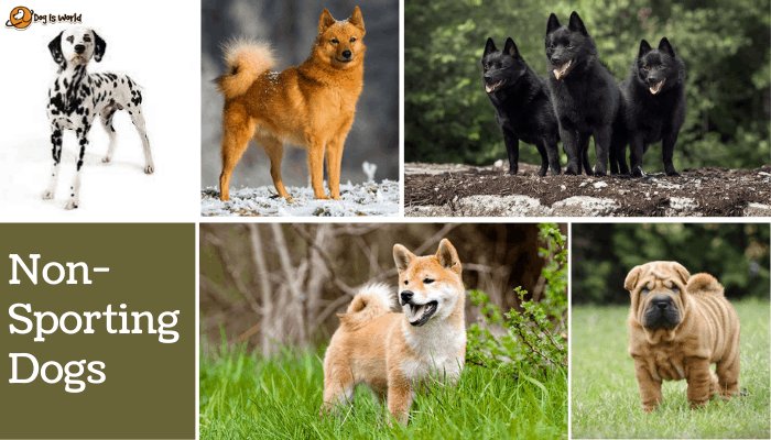 different dogs in non-sporting dog group