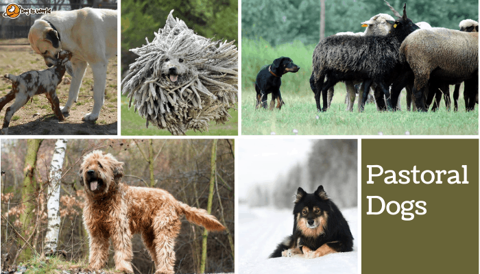 different dogs in pastoral dog group