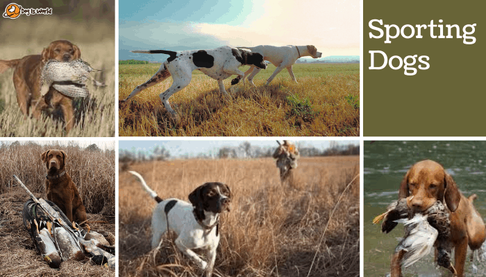 different dogs in sporting dog group