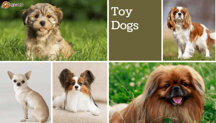 different dogs in toy dog group