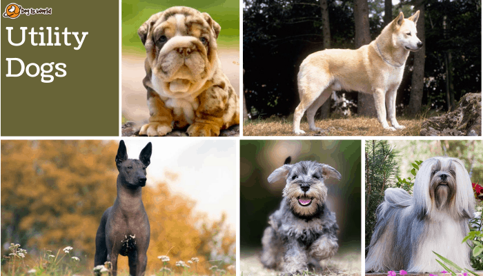 different dogs in utility dog group